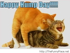 Its-wednesday-funny-hump-day