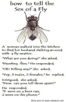 how-to-tell-the-sex-of-a-fly-funny-quote