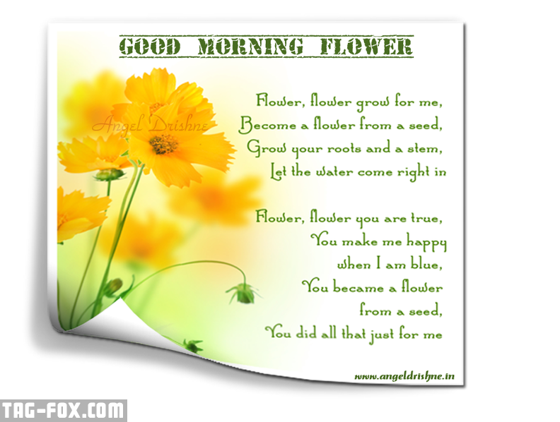 Good-morning-flower.png