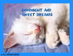 sweet-dreams-kitten-dreams-6376840-535-414