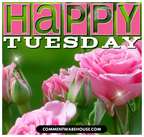 Happy-tuesday-pink-roses