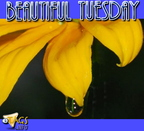 tuesday graphic tags  (83)