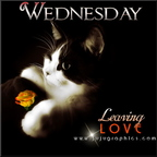 wednesday leaving love 10vggs