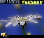 tuesday (506)