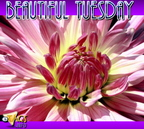 tuesday (660)
