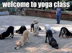 dogs yoga acb4166a0d
