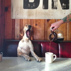 Dog needs his morning coffee